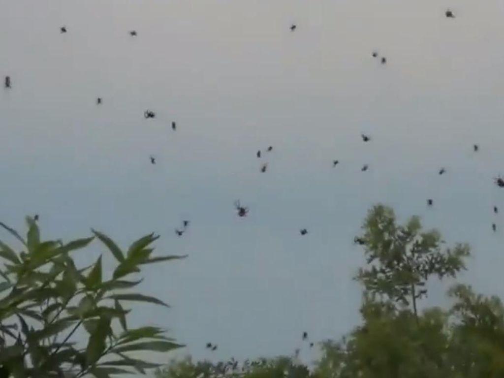 Hujan-hujan Aneh di Dunia: Darah, Laba-laba hingga Rumah di Tebet