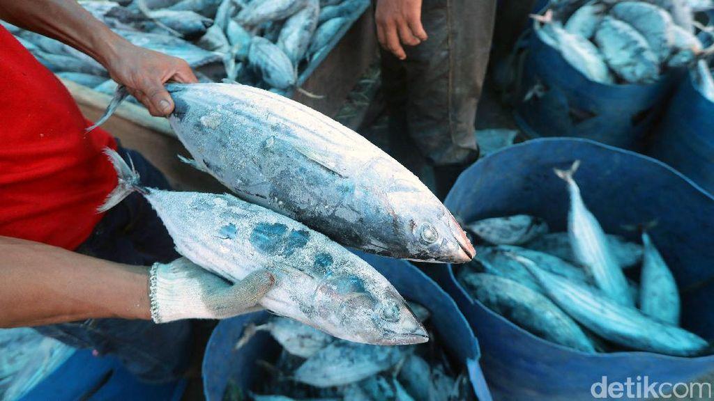 KKP Gandeng BUMN Kembangkan Sektor Perikanan