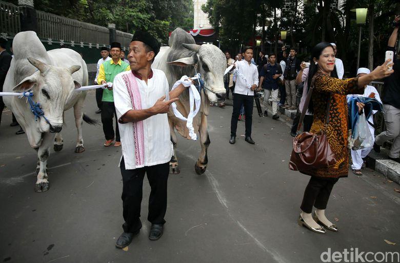 Canda Djarot: Padahal Pak Jokowi Kurus, tapi Sapinya Gede Banget