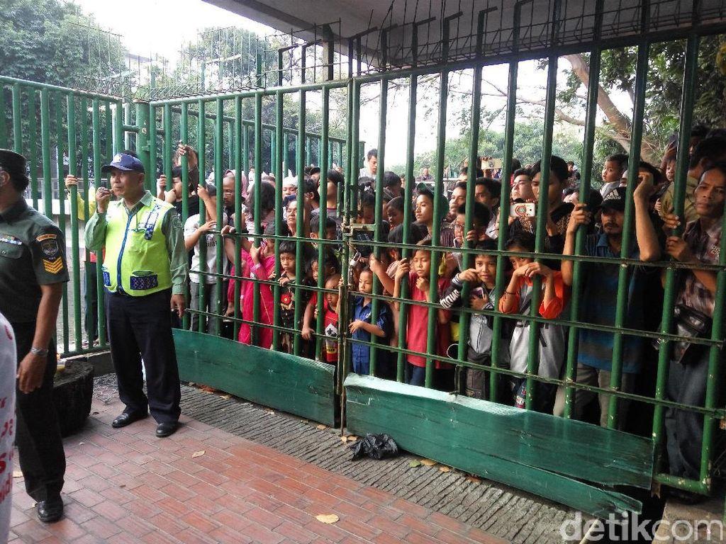 Ke Istiqlal, Warga Berharap Daging Kurban hingga Lihat Sapi Jokowi