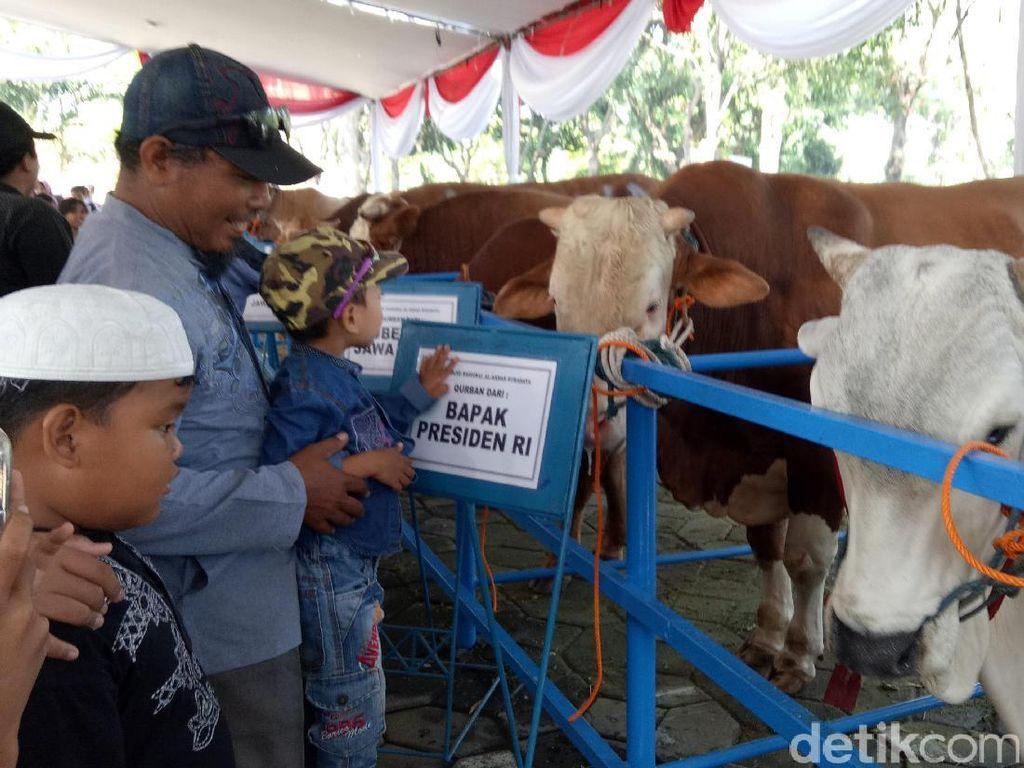 Warga Penasaran dengan Sapi Ongole Sumbangan Presiden Jokowi