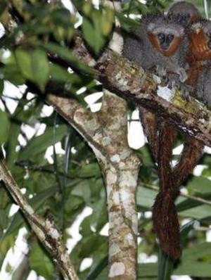 318 Spesies Baru Ditemukan di Amazon, Ini 5 yang Unik