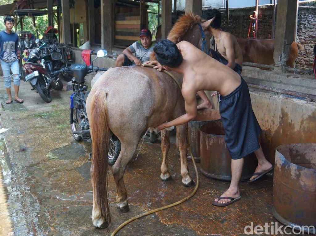 Tak Perlu Cambuk, Begini Cara Kusir Sidik Bikin Kudanya Semangat