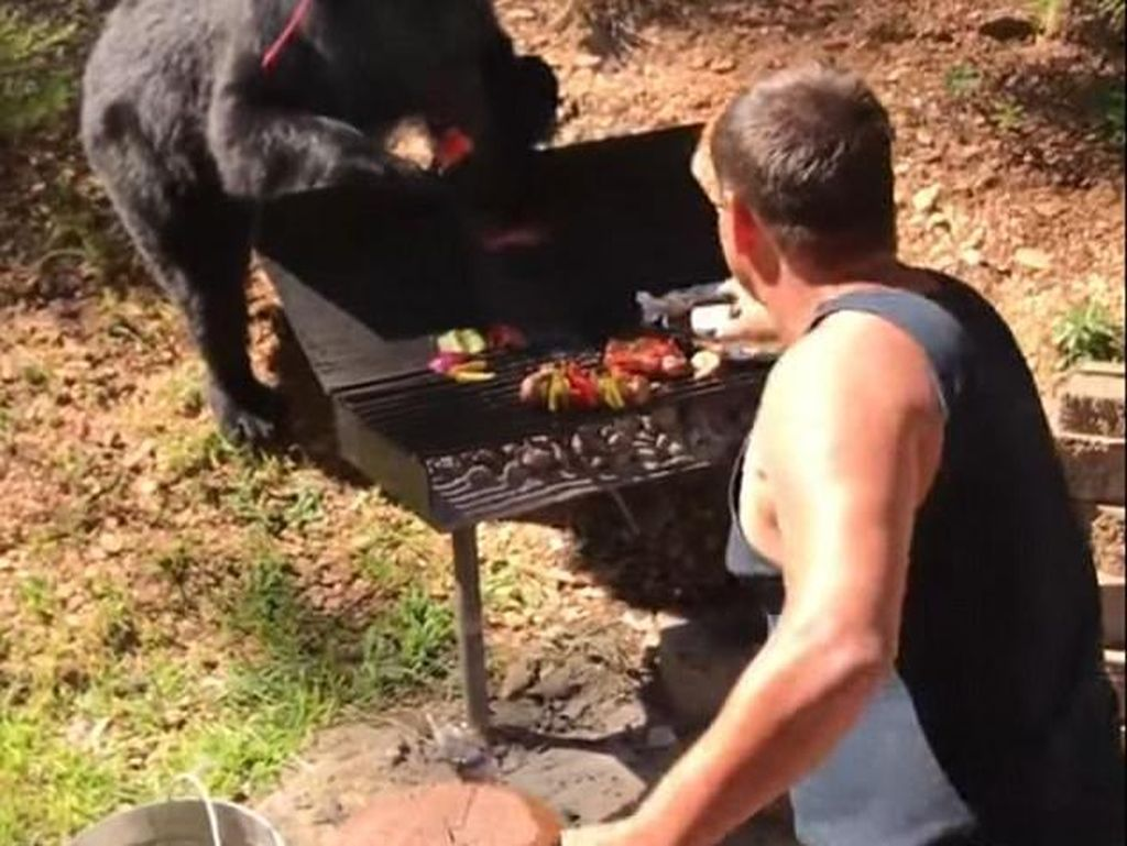 Bukan Ingin Serang Manusia, Beruang Ini Justru Ambil Sepotong Steak dari Panggangan!