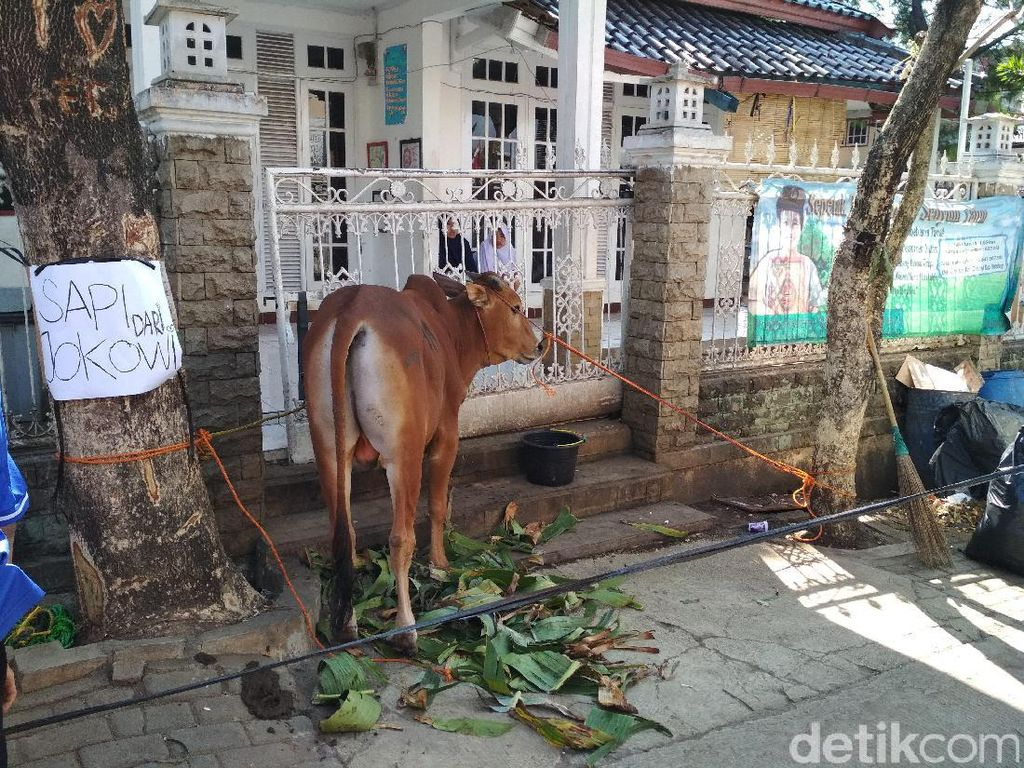 Pesantren Al-Kasyaf Bandung Dapat Hadiah Sapi Kurban Jokowi