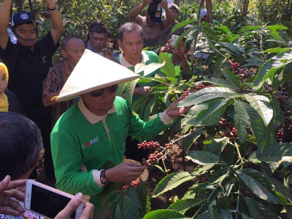 Petani Pasuruan Terus Diajak Petik Merah Kopi Demi Jaga Kualitas
