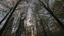 Foto: Hutan Hitam yang Menyeramkan