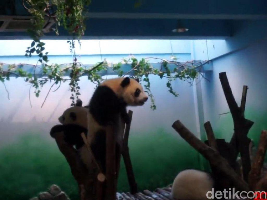 China Luncurkan Kereta Transparan Menuju Desa Panda