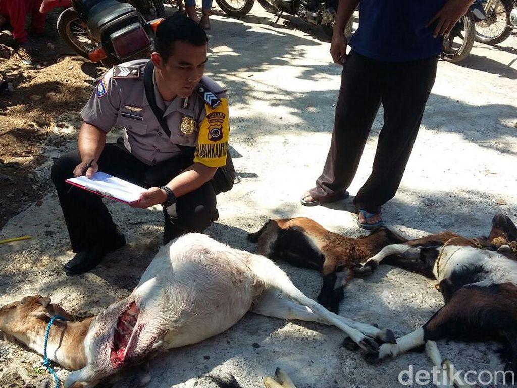Bertambah, Sudah 60 Kambing di Gunungkidul Dimangsa Anjing Liar
