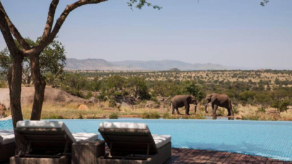 Foto: Kolam Renang Ini Depannya Gajah