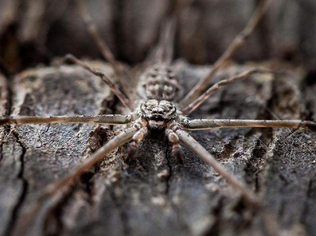Pasien Diabetes Hadapi Amputasi Karena Gigitan Laba-laba
