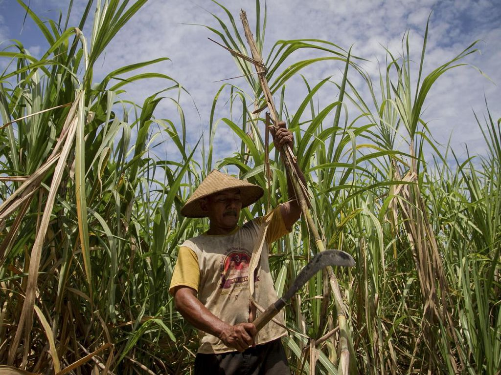 Taiwan Minat Investasi Pabrik Gula Rp 20 Triliun di RI