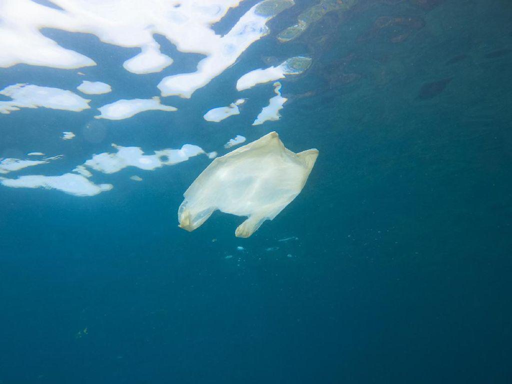 Cerita di Balik Viral Penemuan Sampah Plastik Utuh Berusia 19 Tahun
