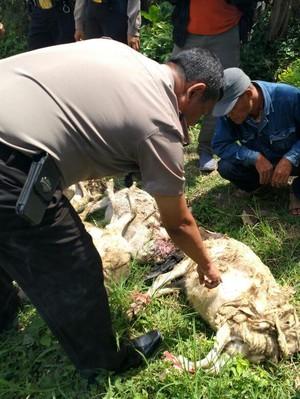 21 Kambing di Malang Mati Misterius Diduga Digigit <i>Vampire Dog</i>