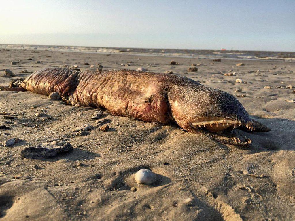 Ngeri! Makhluk Misterius Muncul dan Terdampar di Pantai Texas