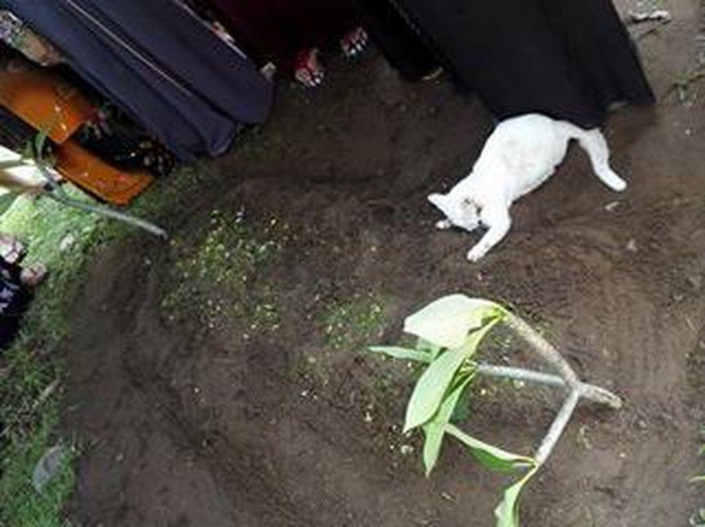 Mirip Kisah Hachiko, Kucing Ini Tak Mau Tinggalkan Makam Tuannya