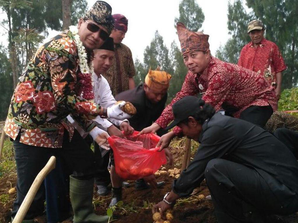 60 Persen Kentang di Jatim Dipasok dari Pasuruan