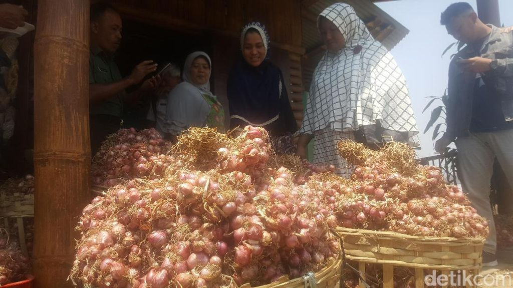Kabupaten Malang Sukses Produksi Bawang Merah