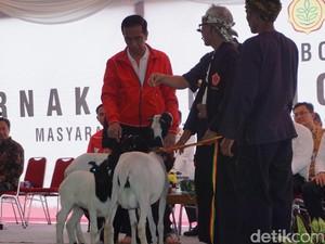 Dibantu 3 Orang, Jokowi Sekarang Sudah Punya 11 Kambing