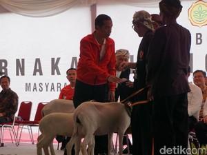 Saat Jokowi Dibuat Penasaran oleh Peternak Kambing