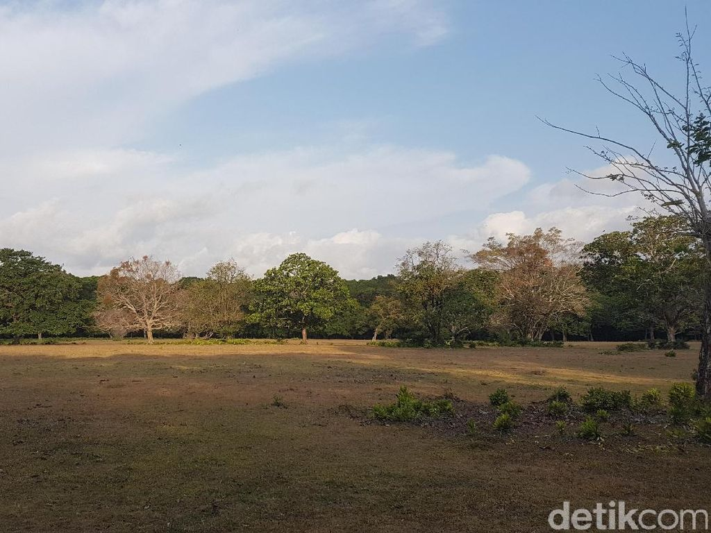 Ini Lokasi Ranger TNUK Pergoki Kucing Besar Diduga Harimau Jawa