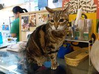 Kafe kucing yang unik di Hong Kong.