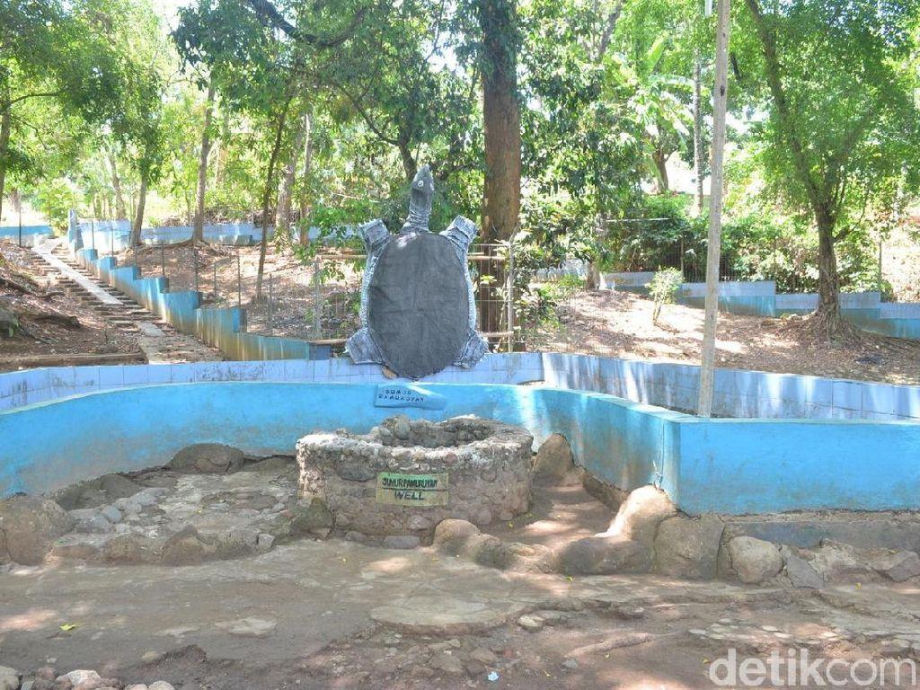 Foto: Penampakan Kura-kura Belawa Cirebon