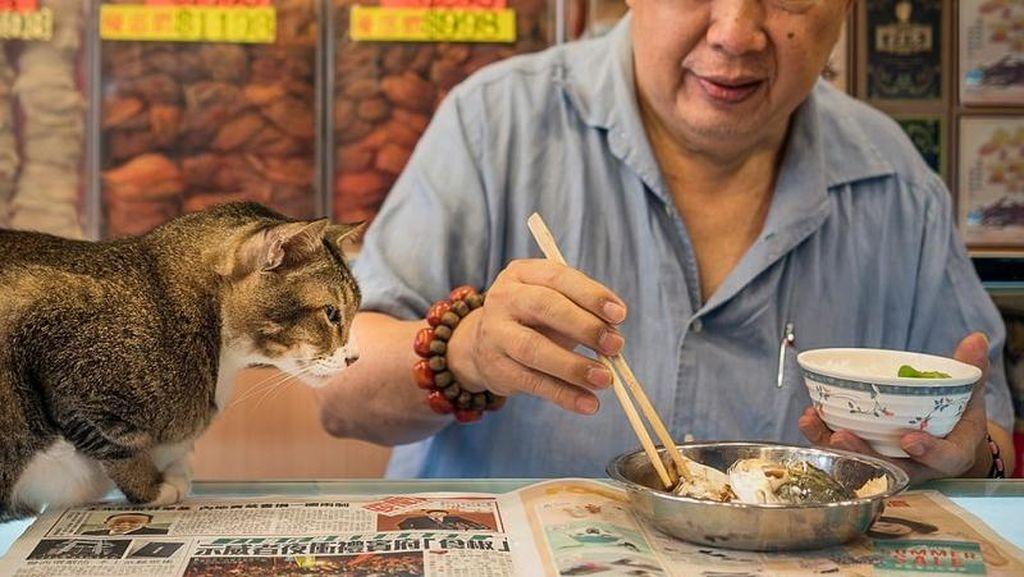 Fotografer Ini Abadikan Kucing yang Berkeliaran di Sekitar Pasar di Hong Kong