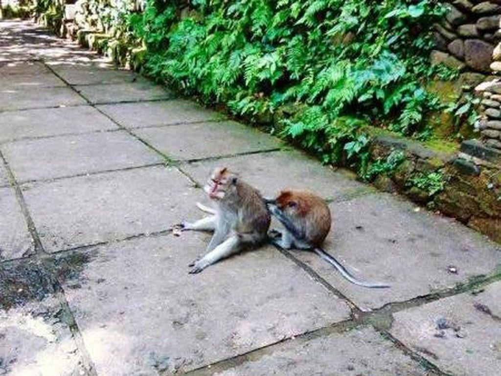 Ketemu Monyet-monyet Lucu di Ubud