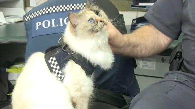 Ini Tia, Kucing Polisi Menggemaskan yang Hobi Tidur Siang