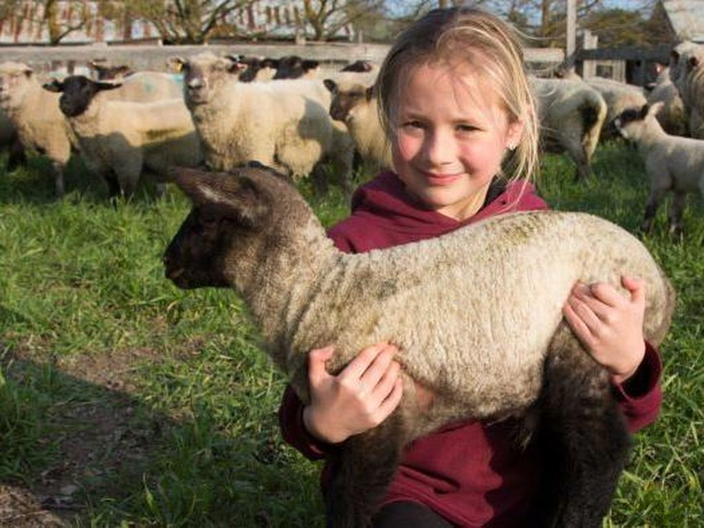 Emily, Usia 6 Tahun Sudah Jadi Peternak Domba