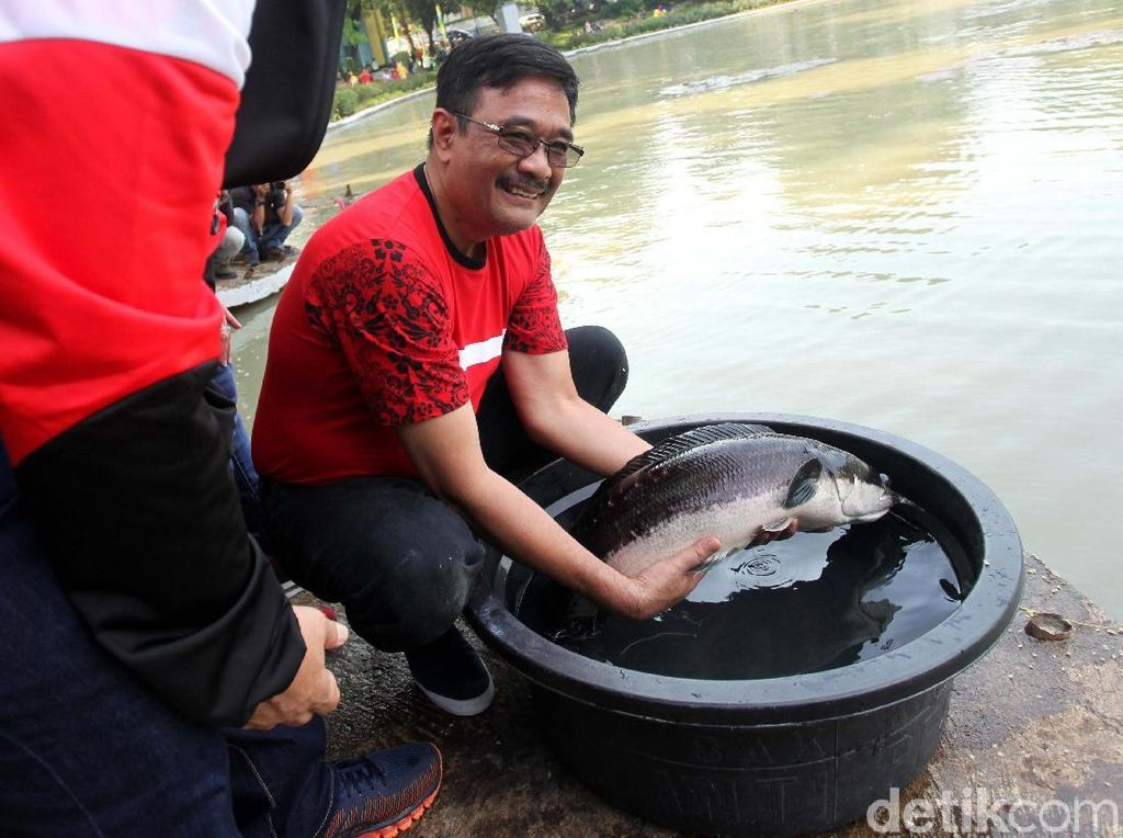 Djarot Lepas 50 Ribu Benih Ikan di Taman Situ Lembang