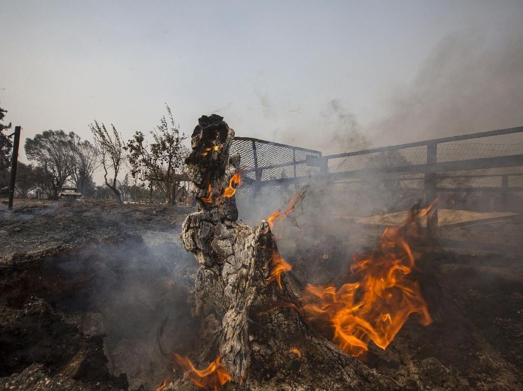 Kebakaran yang Memporak Porandakan California
