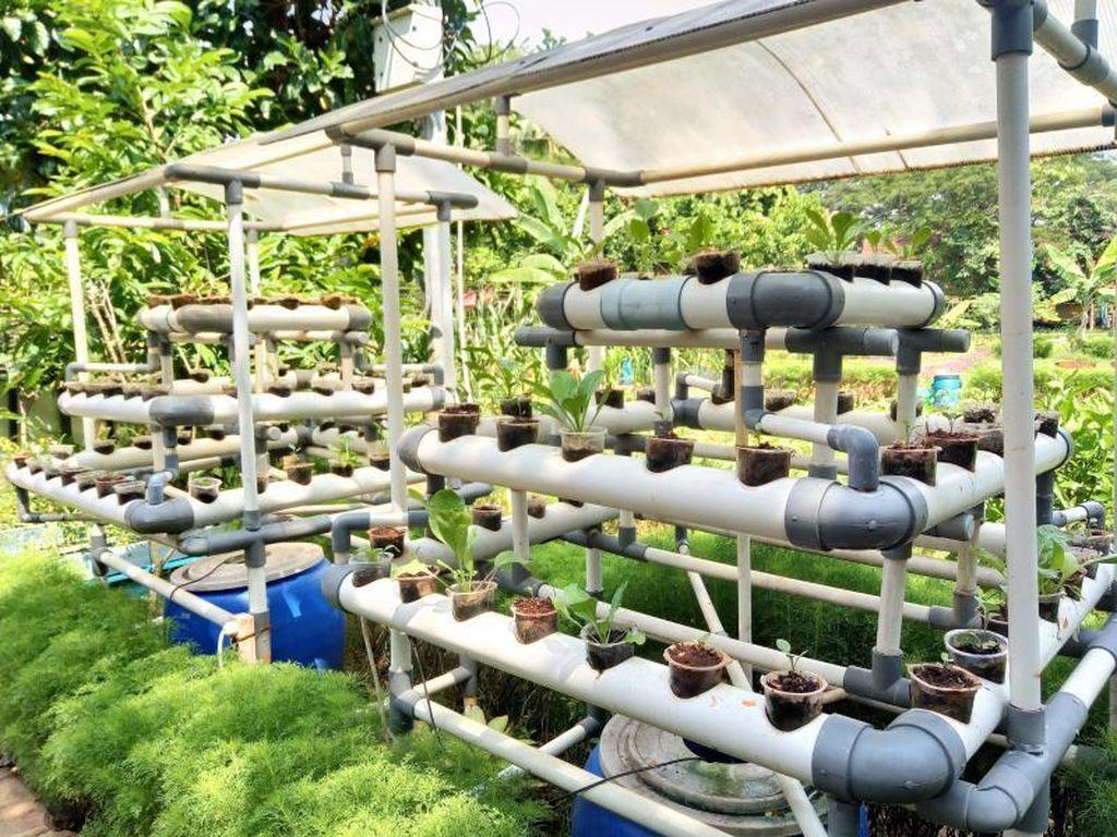 Berkebun dan Beternak Tak Pernah Seasyik Ini