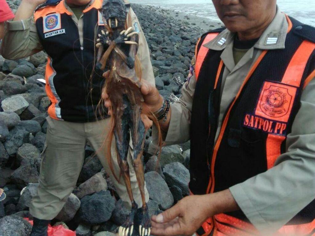 Begini Seramnya Jenglot yang Dibuang di Pantai Watu-watu Surabaya