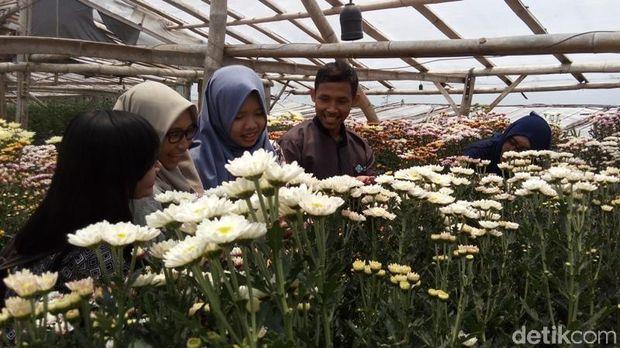 4 Taman Bunga di Yogya dan Semarang yang Mirip di Luar Negeri