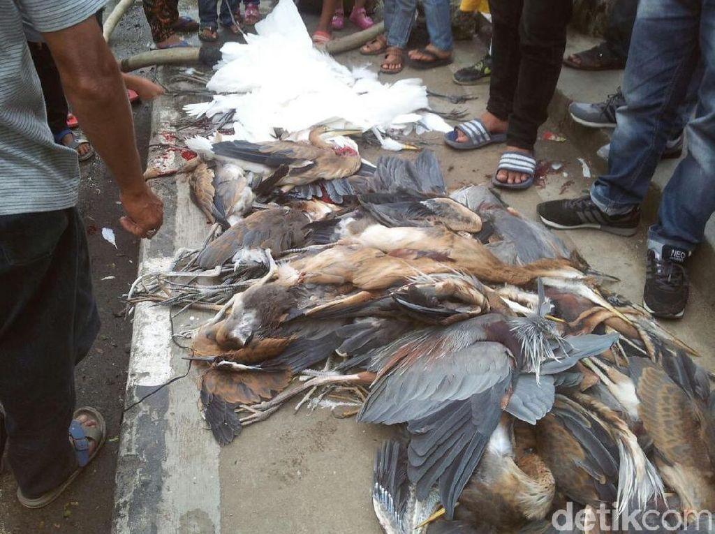 Ramai soal Kuntul di Cagar Alam Sumbar yang Mati Ditembaki