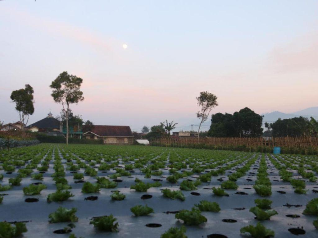 Jurus Kementan Perketat Impor Hortikultura