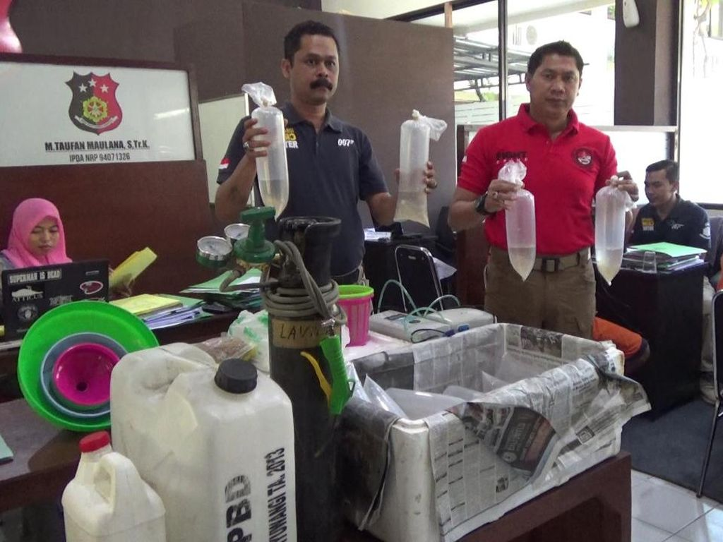 Penyelundupan 4.080 Ekor Baby Lobster Digagalkan di Banyuwangi