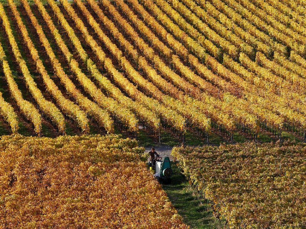 Melihat Pesona Musim Gugur di Swiss