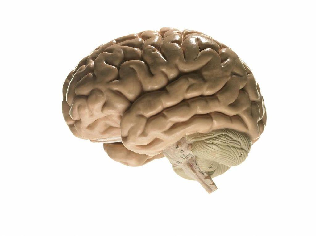 5 Gejala yang Biasa Menyertai Brain Atrophy