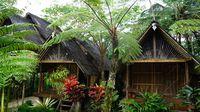 Homestay di Desa Nglinggo (Shinta/detikTravel)