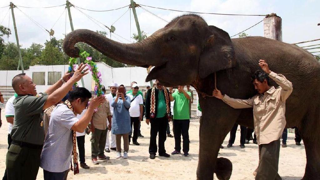 Hadiri Festival Way Kambas, Cak Imin Dapat Kalung Bunga dari Gajah
