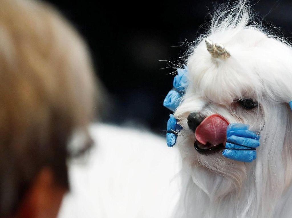 Lucunya! Anjing-anjing Ini Ikut World Dog Show di Jerman