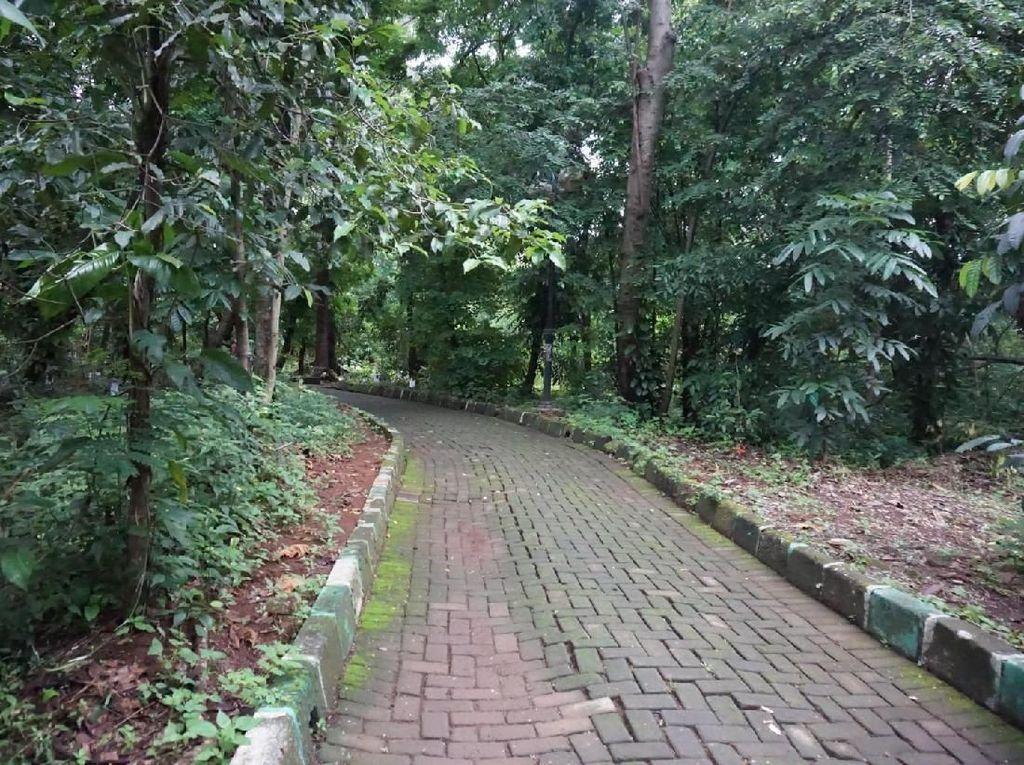 Menyusuri Hutan Kota Srengseng yang akan Menjadi Hutan Wisata