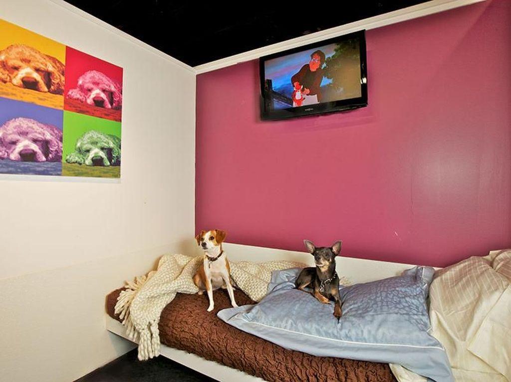 Foto: Hotel Khusus Buat Anjing