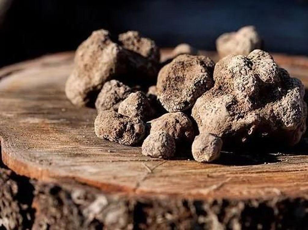 Black Truffle Seharga Rp 26,8 Juta Per Kg Berhasil Ditemukan di Inggris