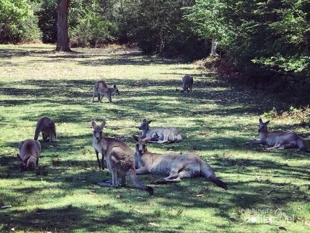 Dari Cruising Sampai Main Bersama Kangaroo di Australia