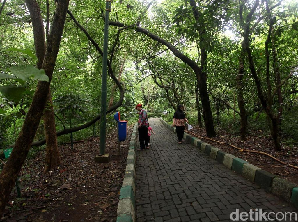 Hutan Kota Srengseng, Alternatif Wisata Alam Jakarta