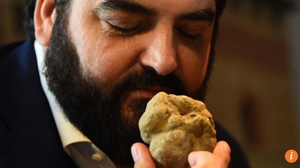 Pria Asal Hong Kong Ini Berhasil Beli Jamur Truffle Putih Seharga Rp 1,2 Miliar